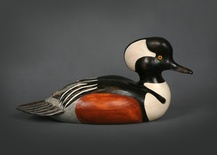 Premier Hooded Merganser